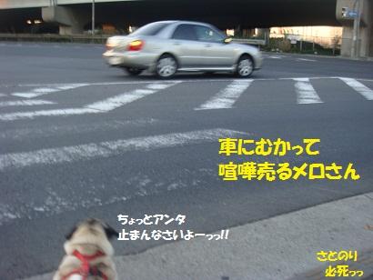 DSC07338_20111225023220.jpg