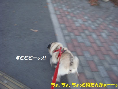 DSC07340_20111225020558.jpg