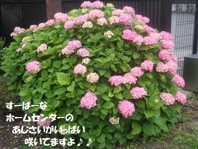 DSC07353.jpg