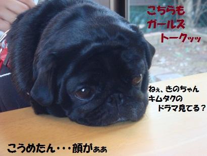 DSC07365_20120515035846.jpg