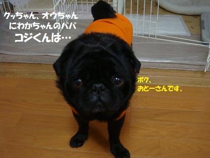 DSC07388_20120609174850.jpg