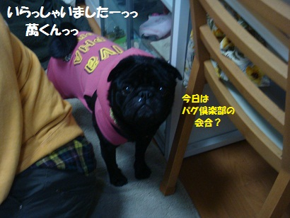 DSC07475_20120608232701.jpg
