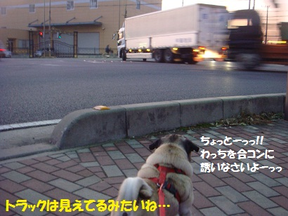 DSC07545_20120205024747.jpg