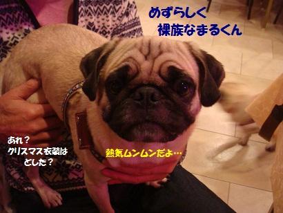 DSC07601_20120614044532.jpg