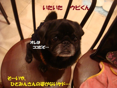 DSC07637_20120614124930.jpg