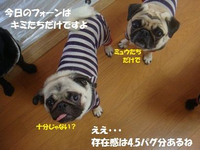 DSC07685_20111231060352.jpg