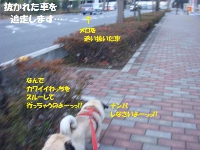 DSC07742.jpg