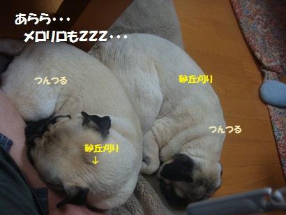 DSC07776_20111231124751.jpg