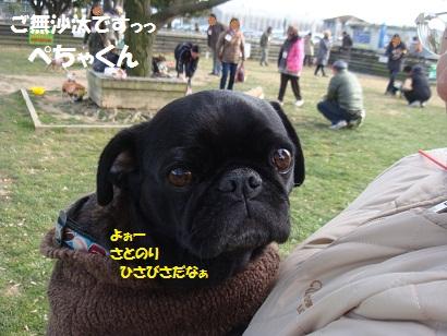 DSC07843_20120618030655.jpg
