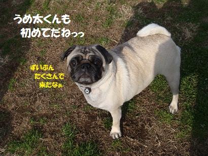 DSC07853_20120618032643.jpg