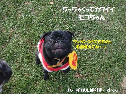 DSC07868_20120618034300.jpg