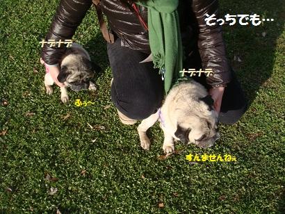 DSC07914_20120619201330.jpg