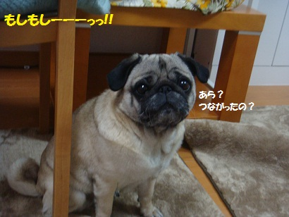 DSC07963_20120606194348.jpg
