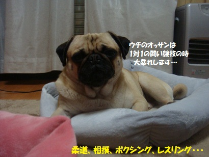 DSC07967_20120601195713.jpg