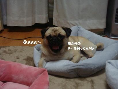 DSC07975_20120606194117.jpg
