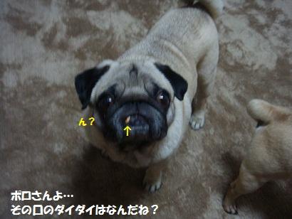 DSC07978_20120601021722.jpg