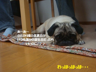 DSC07991_20120106124159.jpg