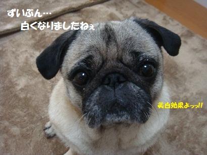 DSC08017_20120531003217.jpg