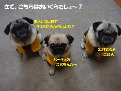 DSC08086_20111231040159.jpg