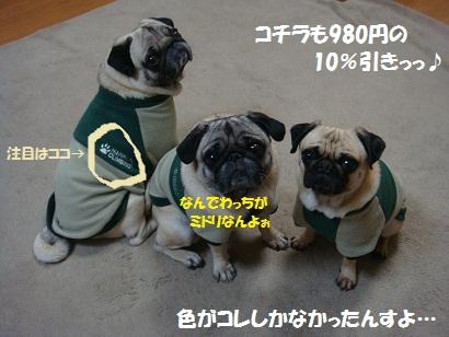 DSC08108_20111231040406.jpg