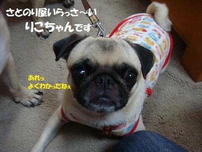 DSC08217_20120106210104.jpg