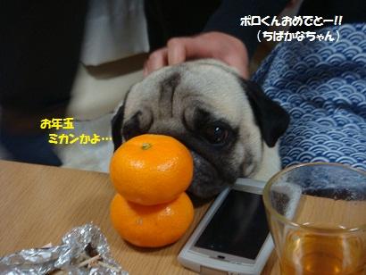 DSC08233.jpg