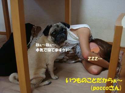 DSC08241_20120106212847.jpg