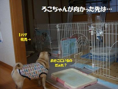 DSC08344_20120108010613.jpg