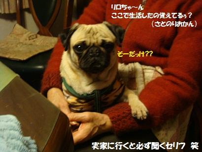 DSC08380_20120105033537.jpg