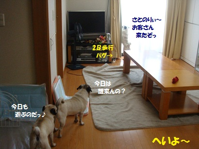 DSC08416.jpg