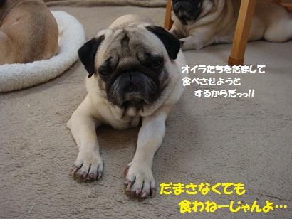 DSC08417.jpg