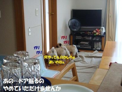 DSC08422_20120115055137.jpg