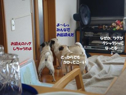 DSC08433_20120115055137.jpg