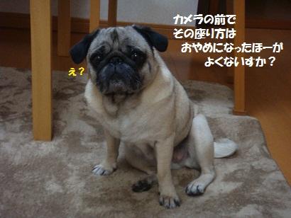 DSC08445_20120531093542.jpg