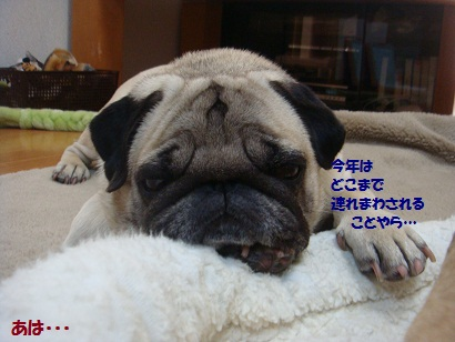 DSC08460_20120110012627.jpg