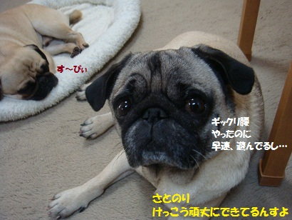 DSC08462_20120110012627.jpg