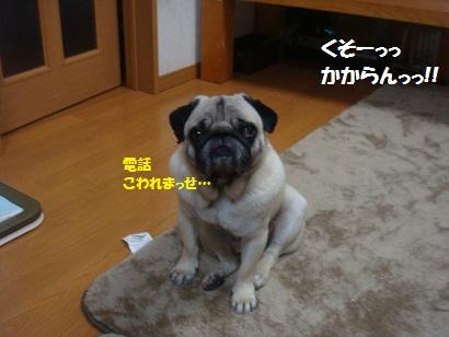 DSC08462_20120606192312.jpg