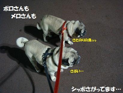 DSC08472_20120106044847.jpg