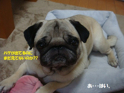 DSC08484_20120601184325.jpg