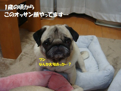 DSC08487_20120531000249.jpg