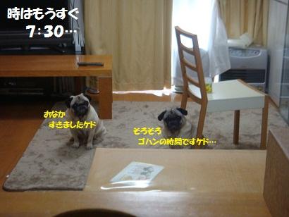 DSC08501_20120601014639.jpg