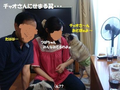 DSC08503_20120216194053.jpg