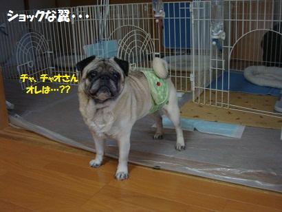 DSC08506_20120115131007.jpg