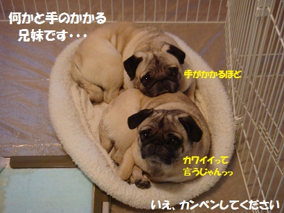 DSC08558_20120117050747.jpg