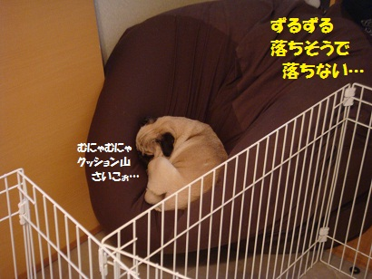 DSC08562_20120110010800.jpg