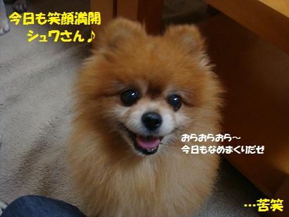 DSC08586.jpg