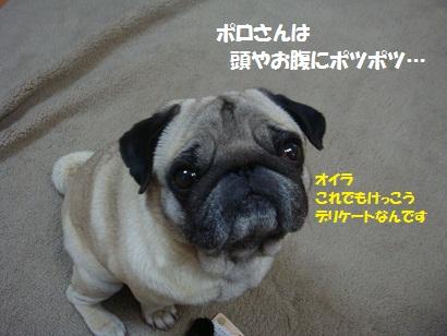 DSC08597.jpg