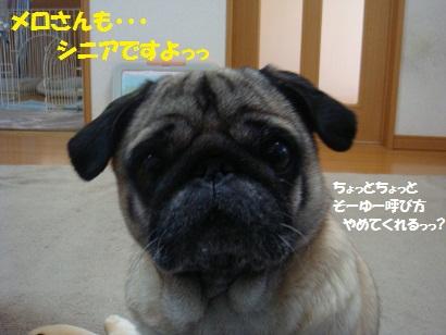 DSC08598.jpg