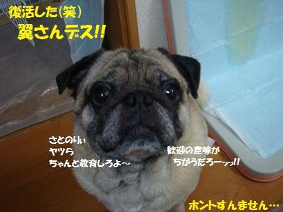 DSC08598_20120115061017.jpg