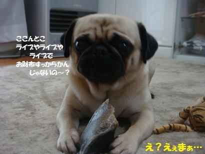 DSC08705_20120607174413.jpg